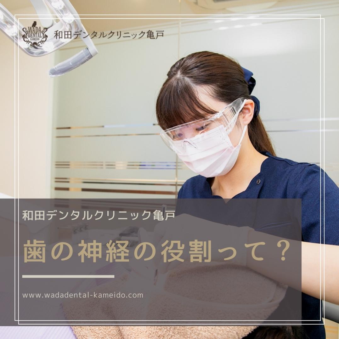 亀戸の歯医者 和田デンタルクリニック亀戸の歯の神経の役割って?